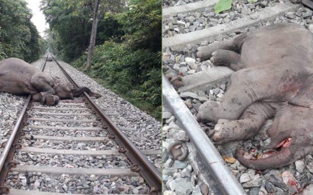 देखिये...कहाँ हाथी अपने बच्चे को बचाने के चक्कर में खुद की जान भी गवां बैठा